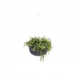 Ghiveci pentru flori, rotund, maro, suspendabil - 3